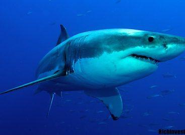 Охоться как акула или умри